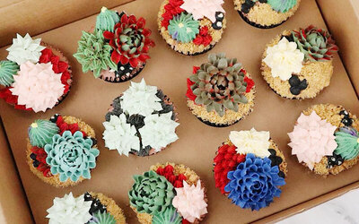 Box of 6 Terrarium Cacti Cupcakes