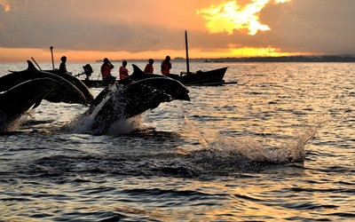 Bali: Lovina Beach Dolphin Tour with North Area Tour for 1 Adult