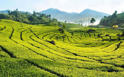 Jakarta: 4D3N Puncak Highland and Mt. Patuha Volcano Tour + Hotel Stay for 1 Person